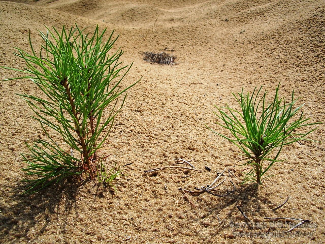 Рослини в пустелі фото 11 фотография